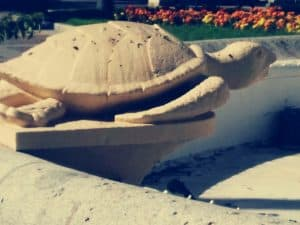 plaza-tortugas-cadiz